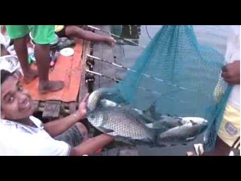 Wow !! Amazing Angling Competition Near Kolkata, West Bengal, India | Fishing Video
