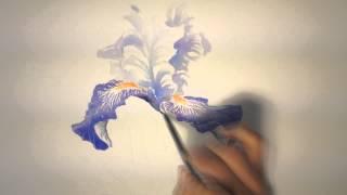Un iris à l'aquarelle (watercolor tutorial)