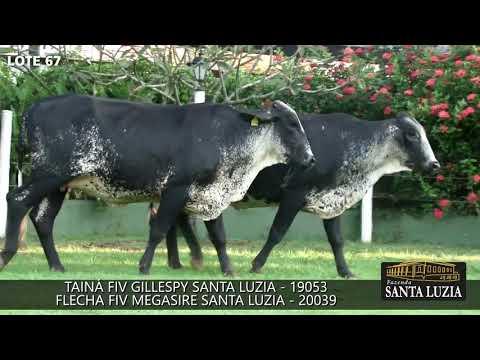 SANTA LUZIA   LOTE 67