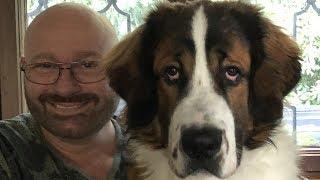 Der bravste Hund der Welt?