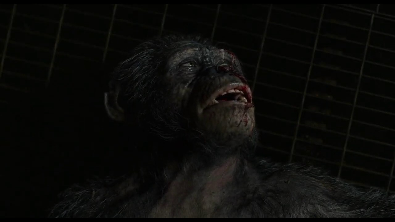 Dawn of the planet of the Apes Funny Caesar's bellow, Koba ...