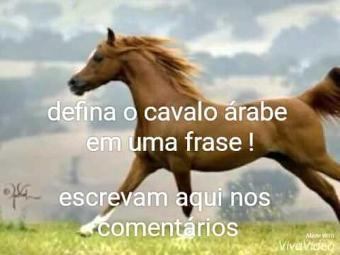 Defina O Cavalo árabe Em Uma Frase Youtube