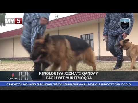 Kinologiya Xizmati Qanday Faoliyat Yuritmoqda