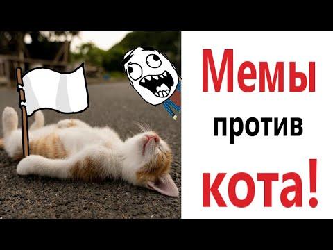 Лютые приколы! МЕМЫ ПРОТИВ КОТА !!! Самое смешное видео! Засмеялся проиграл! – Domi Show!