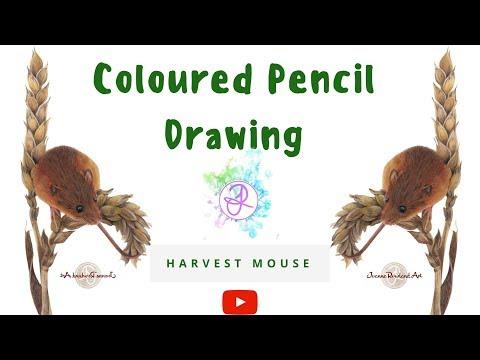 Drawing Harvey the Field Mouse - Joanne Rowland Art
