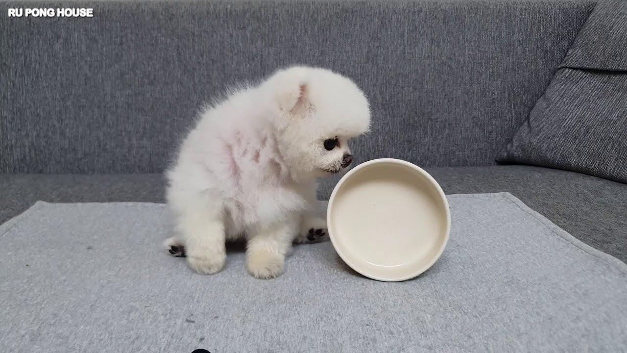 강아지 설거지하는 소리 ASMR/ 리조또 먹방
