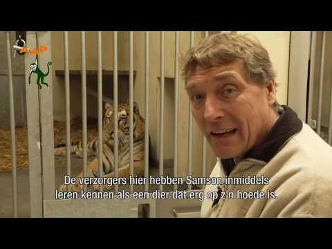 De Reddingsactie Van De Tijgers Pt 1 - Help Mee! - Stichting AAP
