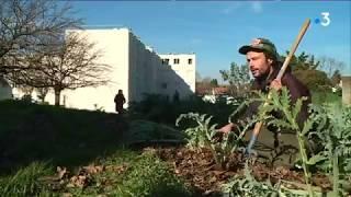 Toulouse : des jardins potagers poussent au pied des HLM