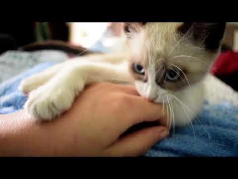Cute funny cat videos I kitty is a savage