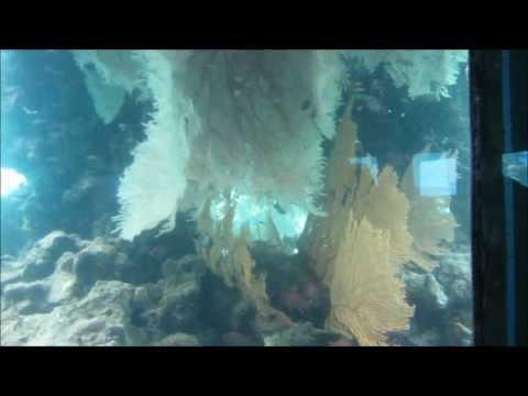 Israel - Video 9 - Eilat Marine Observatory