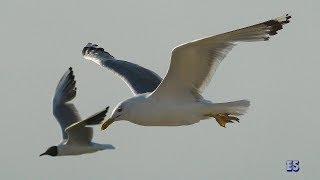 """""""Белые чайки"""" песня о Ейске. Исполняет Вадим Швецов."""