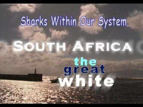 Planet Sea - Sharks Within Our System: South Africa - The Great White