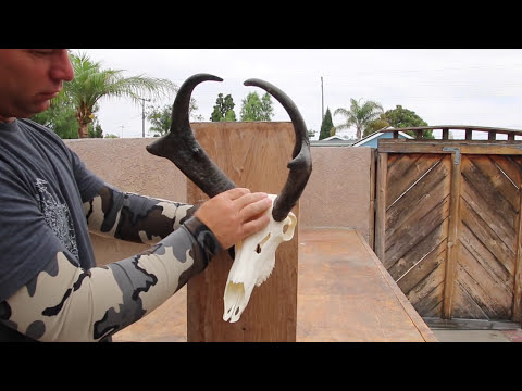 THE SKULL MAX BRACKET