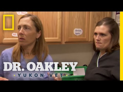 Attack of the Feral Cat | Dr. Oakley, Yukon Vet