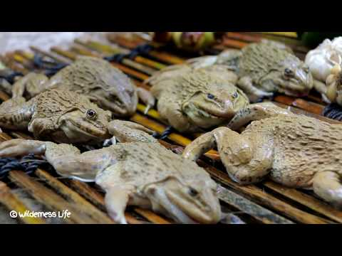 Yummy Frog Soup Recipe – Cooking Frog Soup Recipe in Forest for Dinner n Eating Delicious