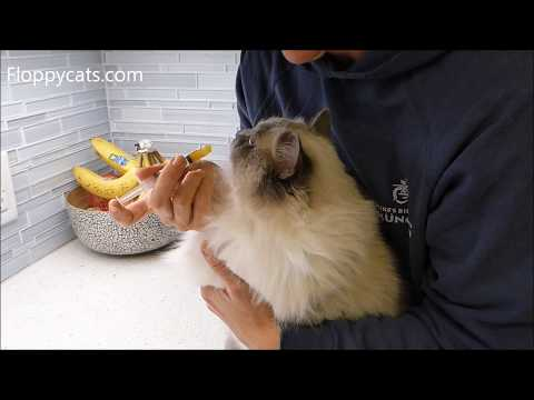How to Give Your Cat Pumpkin to Stop Diarrhea in Cats - Floppycats