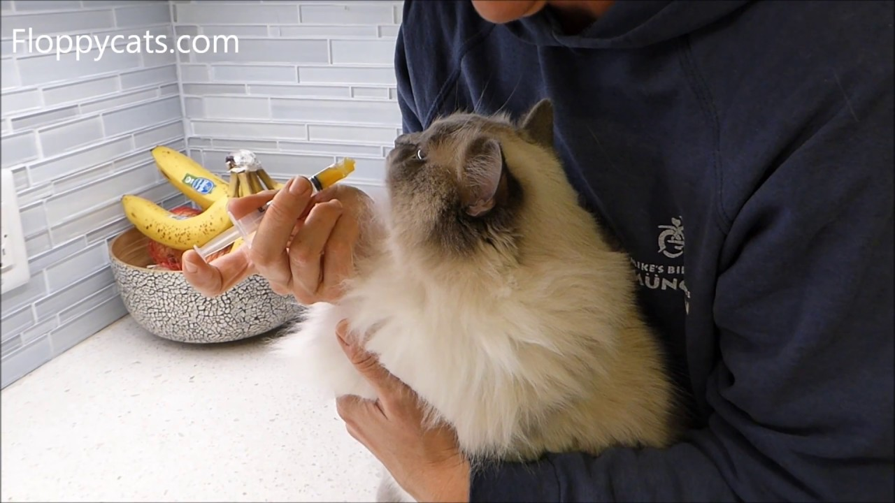How To Give Your Cat Pumpkin To Stop Diarrhea In Cats Youtube