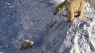 Белый медвежонок в якутском зоопарке «Орто Дойду» впервые вышел в «большой мир»