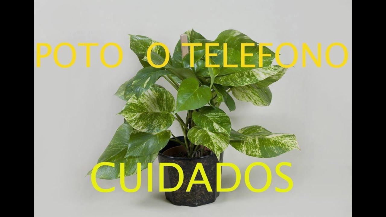 plantas de mi jard n photo o telefono cuidados youtube