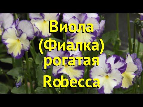 Виола рогатая Робека. Краткий обзор, описание характеристик viola pubescens Robecca