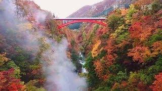 季節が秋から冬へ向かう中、県内の紅葉シーズンは終盤を迎えています。...