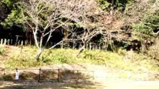 DSC_0801.AVI 称名寺
