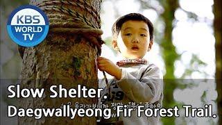 Daegwallyeong Fir Forest Trail [Slow Shelter / ENG / 2019.02.01]