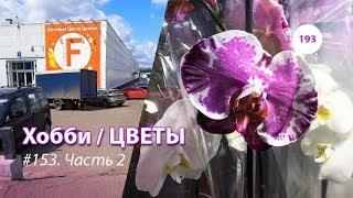 193#153 / Хобби-Цветы / 08.2019 - Floreville (ФЛОРЭВИЛЬ. МОСКВА). ЧАСТЬ 2