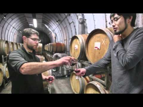 Japan Wine Project - Creating Internationally Acclaimed Japanese Wine