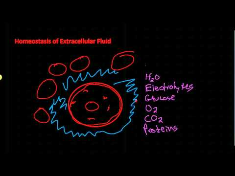 Homeostasis of Extracellular Fluid