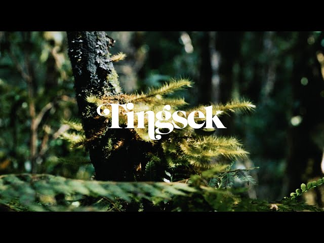 Tingsek - Home - Trailer