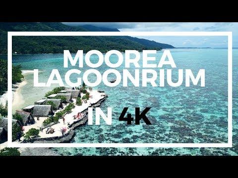 MOOREA LAGOONARIUM IN 4K   SNORKELING FRENCH POLYNESIA