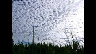 napoleon nube de algodon