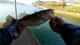 # 53. bass fishing(단편), 충남 예당지…