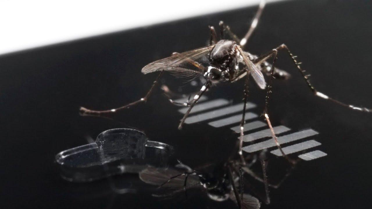 蚊に蚊駆逐ブレスレットを近づけると…