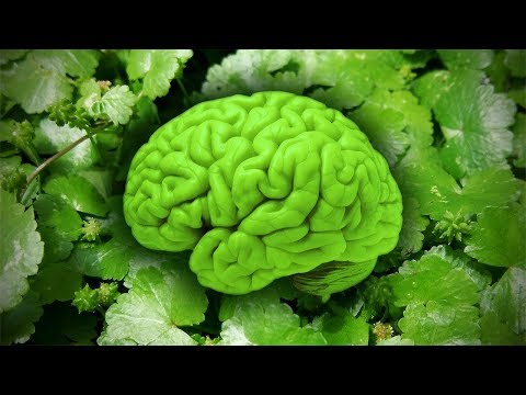 Powerful Brain Natural Medicine You Didn't Know!