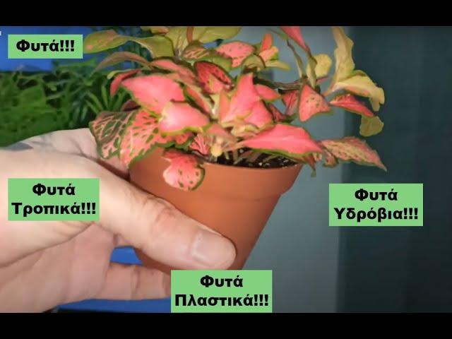 Φυτά πλαστικά, χερσαία και υδρόβια Fdrs Strs 58