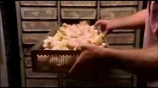 Korporacyjna żywność 2008 Lektor PL cz  1z10