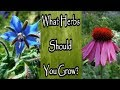 What Herbs Should You Grow for Your Medicinal Herb Garden