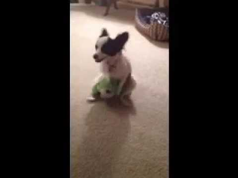 Dog Humping Stuffed Animal Doll Youtube