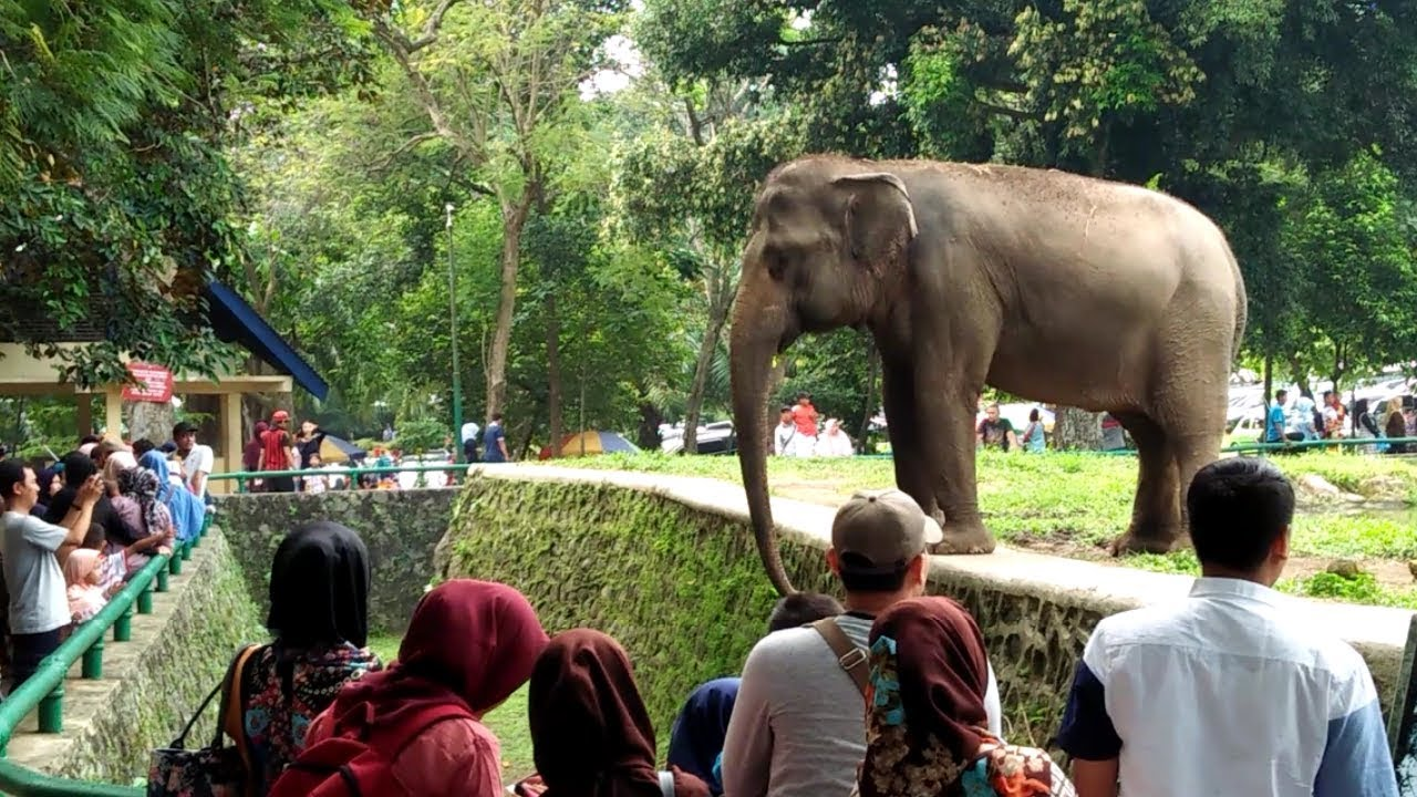 Kebun Binatang Ragunan Sejarah Taman Margasatwa Pertama di
