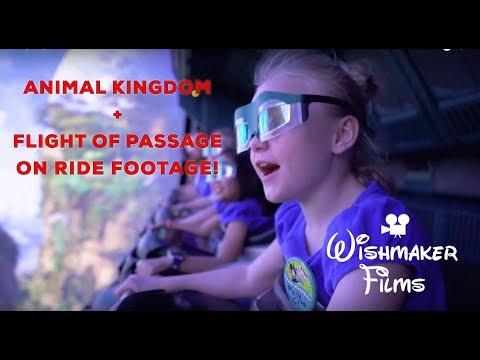 Disney's Animal Kingdom - Wishmaker Films