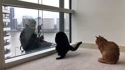 These Cats Love Window Cleaners