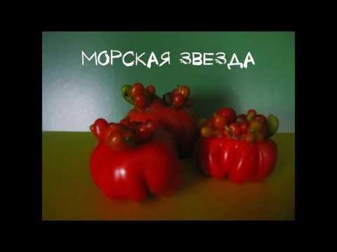 Сорта томатов 4 часть