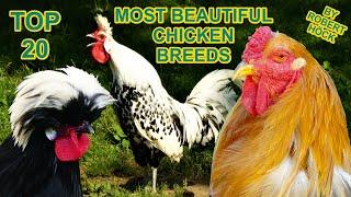 20 Beautiful Chicken Breeds - Silkie, Brahma, Vorwerk, Bantam, Leghorn, Pekin, Araucana, Hühner HD