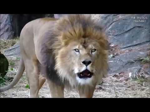 Топ 10 самых опасных животных в мире. Армянский акцент!