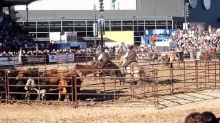 Gauchos à cheval séparant des vaches du reste du troupeau
