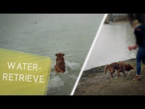 Water retrieve - Wasserapport - Dummytraining | Cuba´s Libre