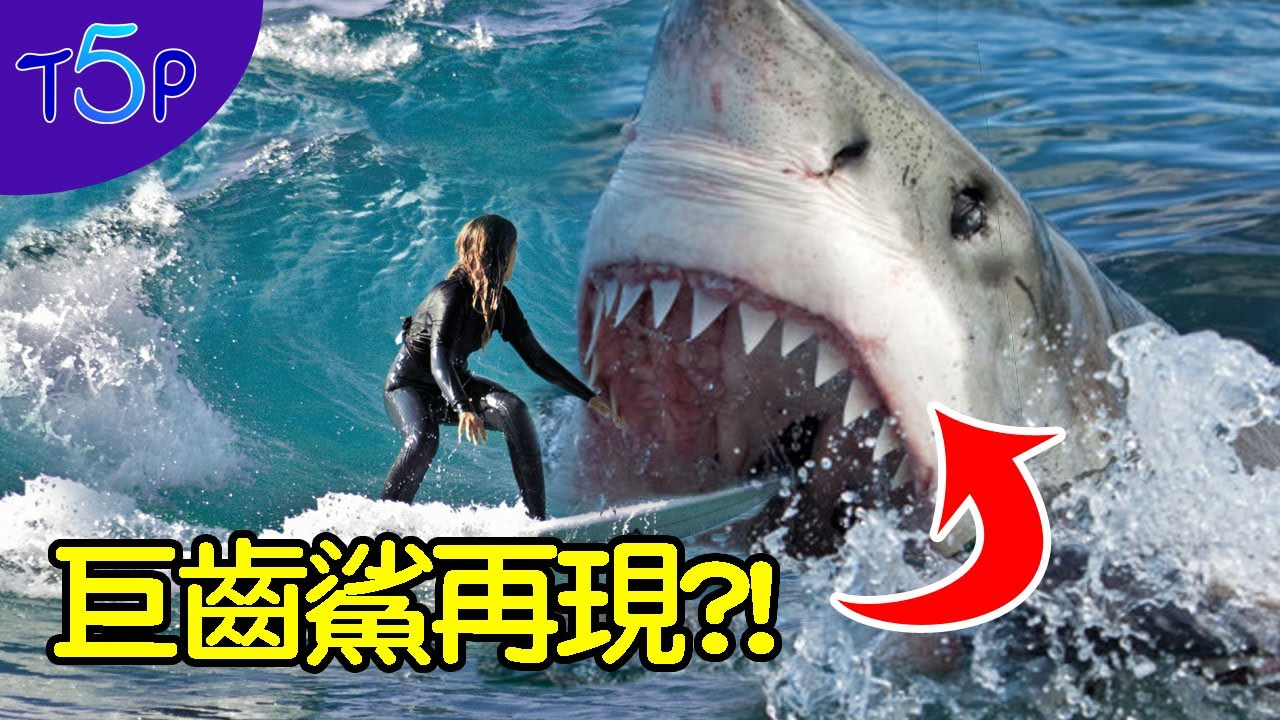 史前巨齒鯊依然存在深海裡 多報告證實 - YouTube
