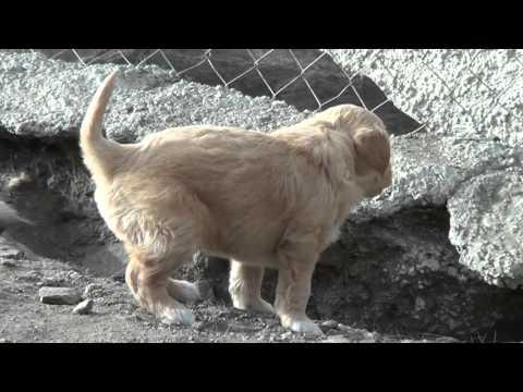 Puppy Rescue 4